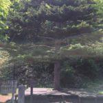 Sacred Place  那須温泉神社 vol.2